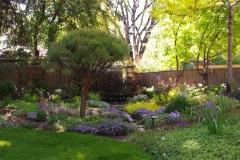 Backyard2